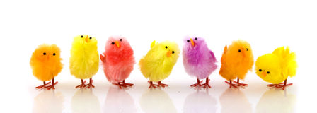 many-little-easter-chickens-7522962